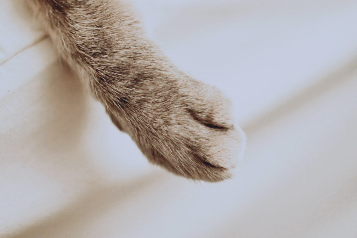 ¿Cómo cortarle las uñas a un gato?