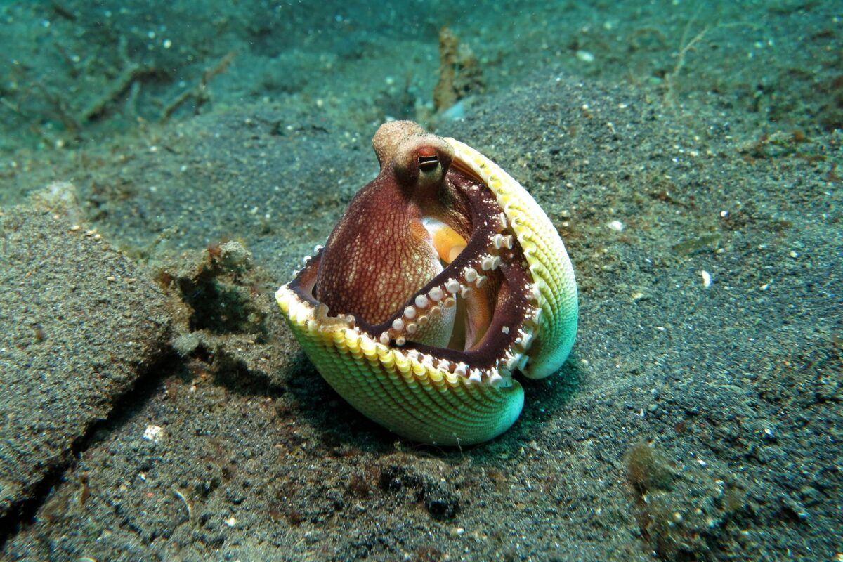 Cómo se reproducen los moluscos