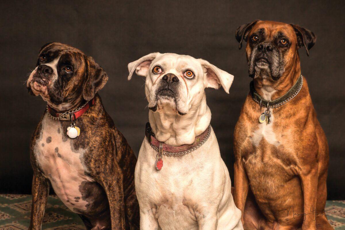 Cómo tratar la menopausia en perros