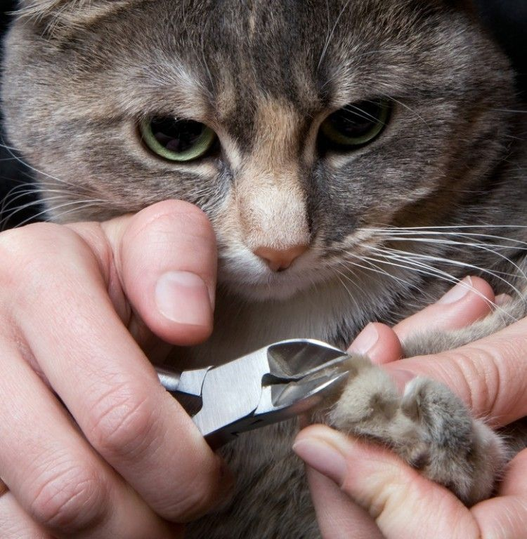 corte de uñas gato