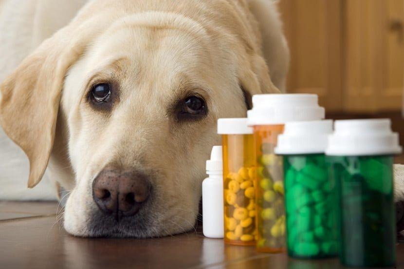 dar pastilla a perro