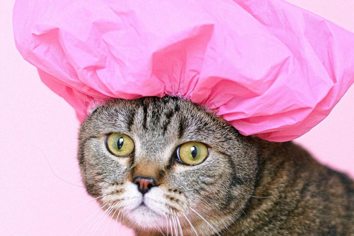¿Qué hacer si a mi gato se le cae el pelo?