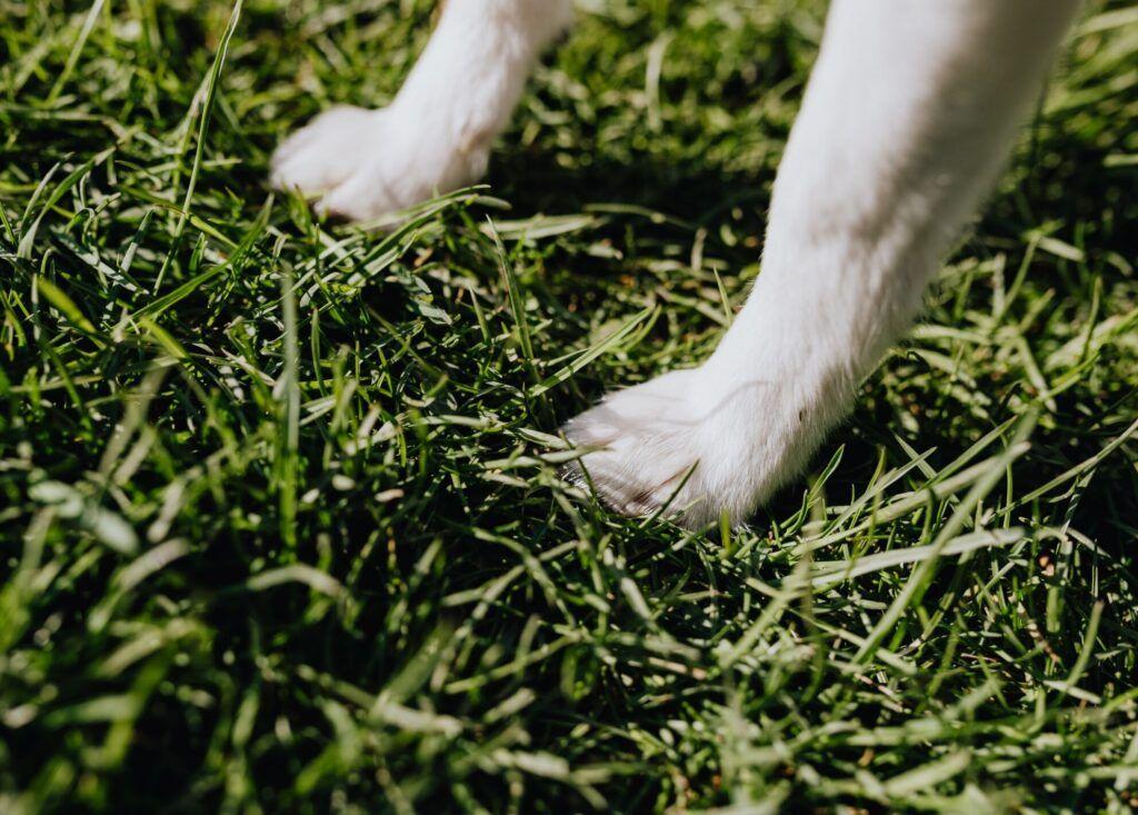 lavar patas de perro