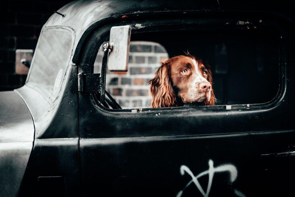viaje con perro en coche