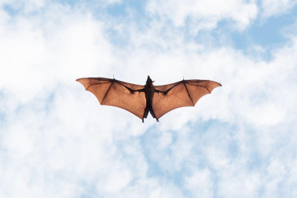 Ahuyentador de murciélagos