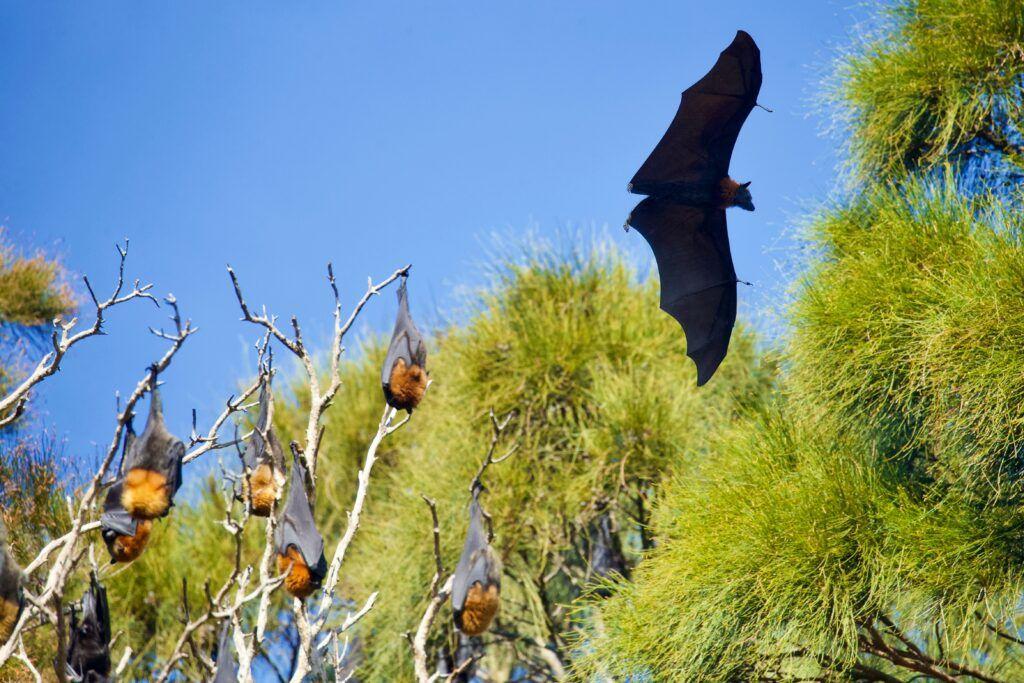 ahuyentar murciélagos